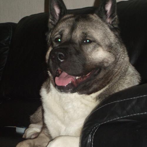 obelix1664's avatar