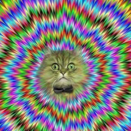 MonkeyyShitter420's avatar