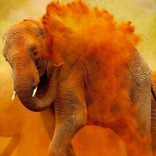 Vivek Kumar 104's avatar