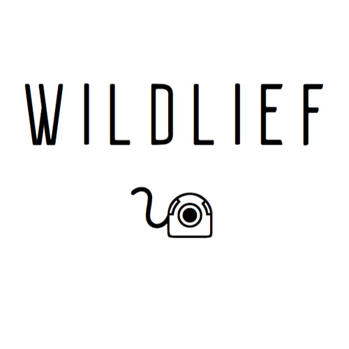 Wildlief's avatar