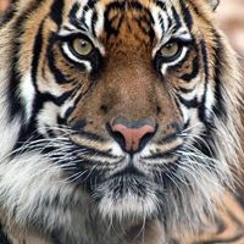Rikardo Reyes 1's avatar