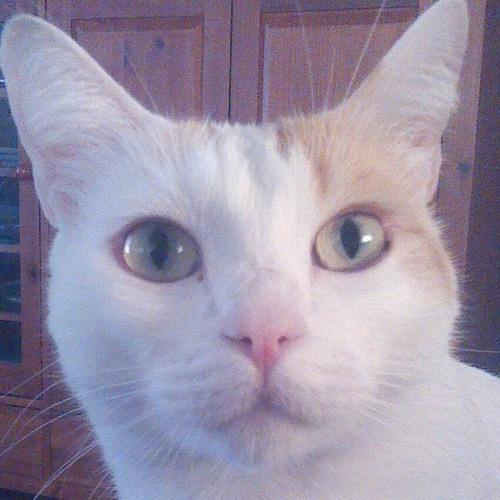 firn's avatar