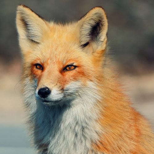 marqmeauxs's avatar