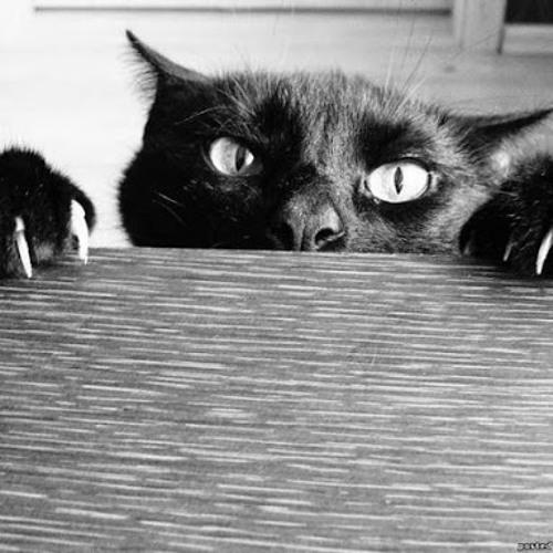 blackcat17's avatar
