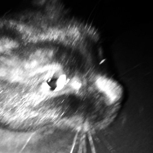sloopythedog's avatar