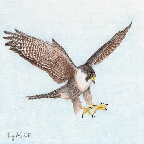baajfalcon's avatar