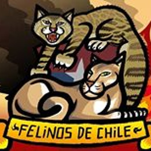 Felinos de Chile's avatar