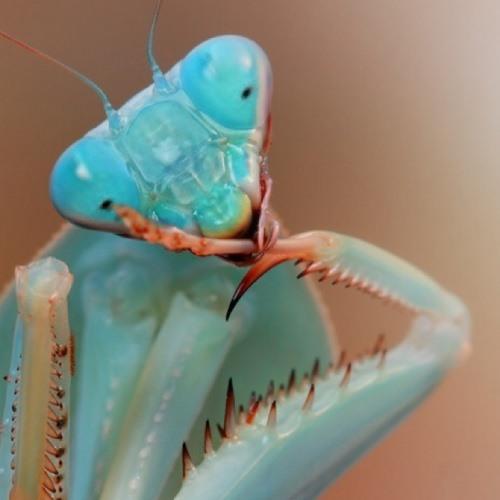 mikapony's avatar