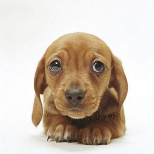 Püpyïse's avatar