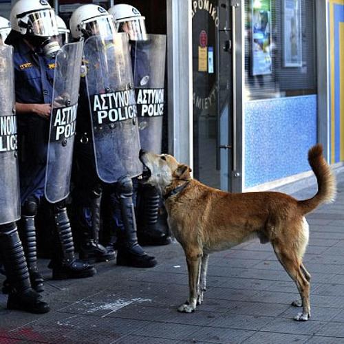 Riotdog's avatar