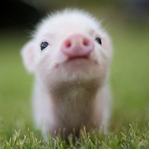 Sneaky Piglet's avatar