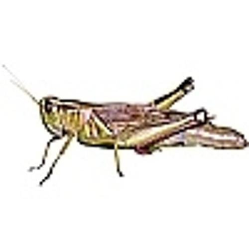 qosegaj's avatar
