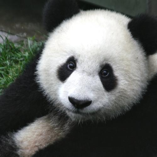 IndigoPanda's avatar