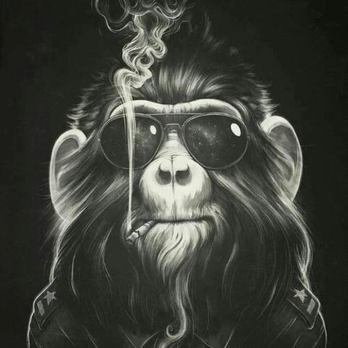 pelo81's avatar