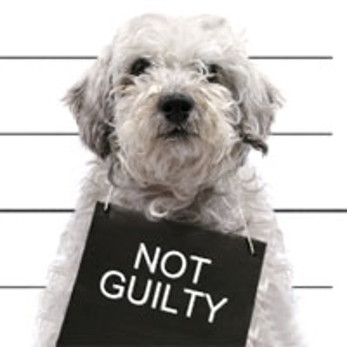 Audio is Guilty's avatar