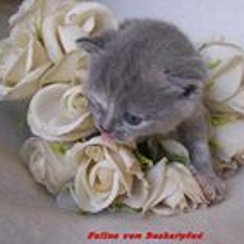 Bkh Vom Beckerpfad's avatar