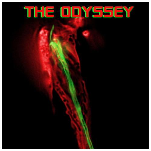 The Odyssey - BC's avatar