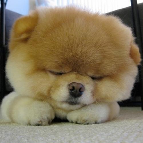 fluff pup's avatar