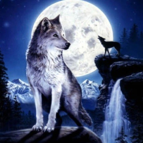 Wolves are peace's avatar