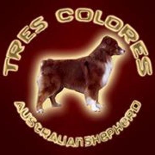 Tres Colores Shepherds's avatar