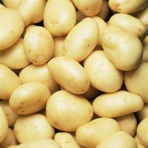 Potatoes around us.'s avatar