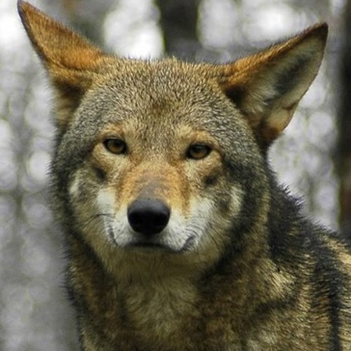 Paradox Wolf's avatar