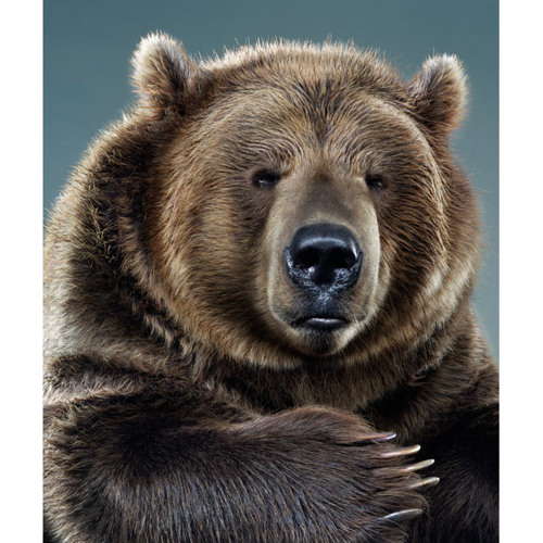 Groovy Grizzly's avatar