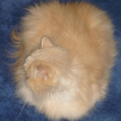 Hovercat Repost's avatar