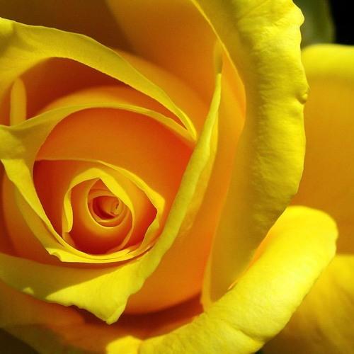 Belle Fleur #'s avatar