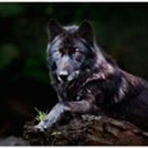 Bret Baker 3's avatar
