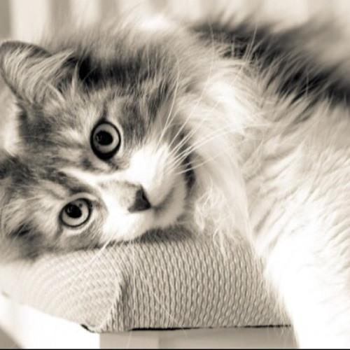 kitty kat :)'s avatar