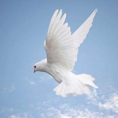 Ibrahim Mohammed 21's avatar