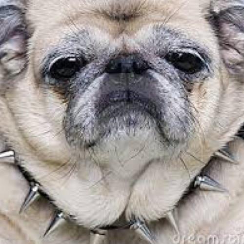 •PugPee•'s avatar