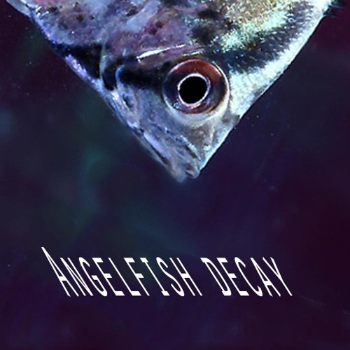 Angelfish Decay's avatar