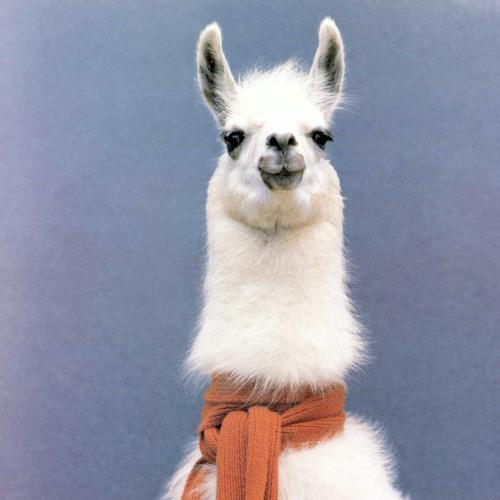 the_jolly_alpaca's avatar