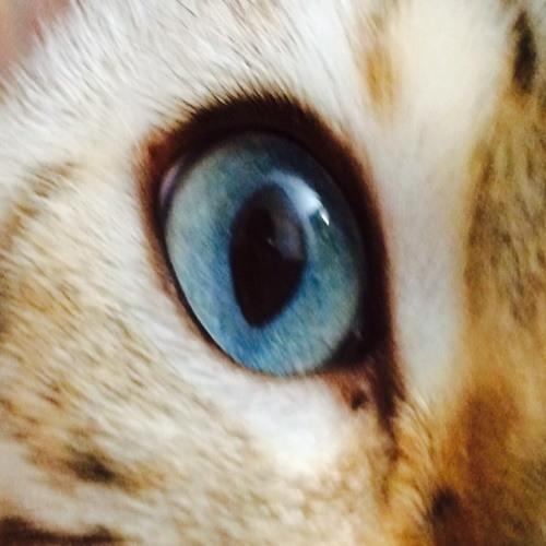 razmataz28's avatar