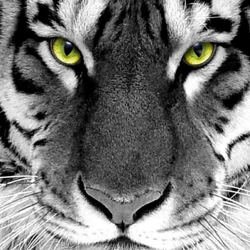 Gheyath's avatar