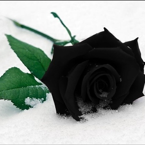 Black Rose's avatar