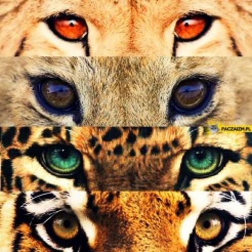 Animals Gone Wild Network's avatar