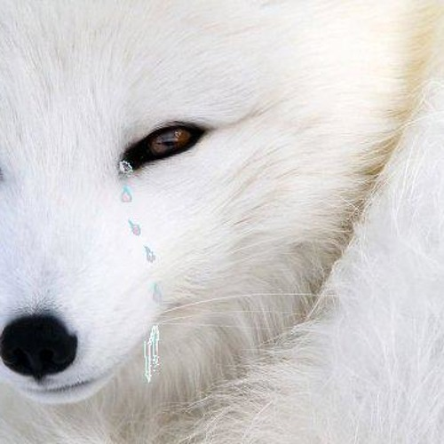Fakeƒox's avatar