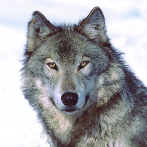 LoneWolfiNTj's avatar