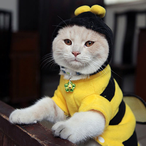 Cat Bee's avatar