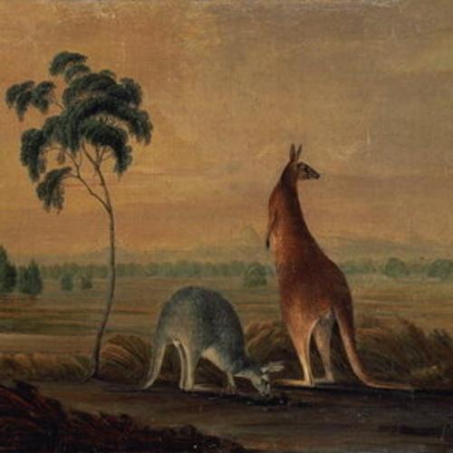 marsupial. {}'s avatar