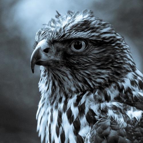 uenloco's avatar