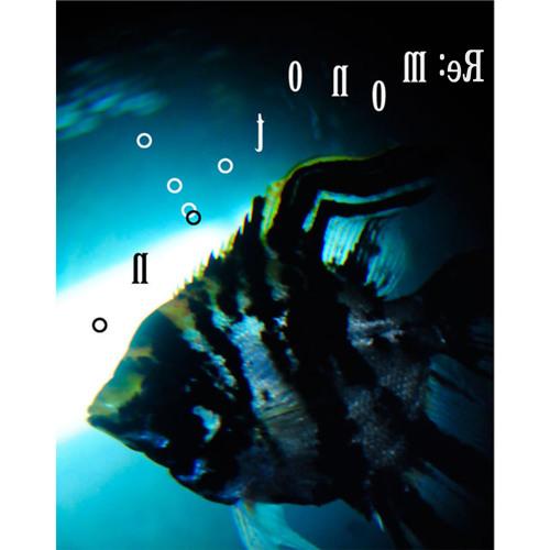 monotooooono's avatar
