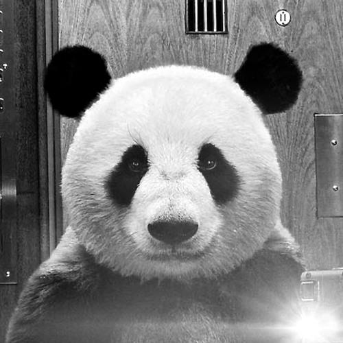 gustavomagalhaes's avatar
