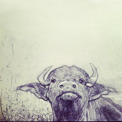 Moogatu's avatar