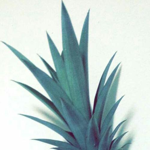 fedia_d's avatar
