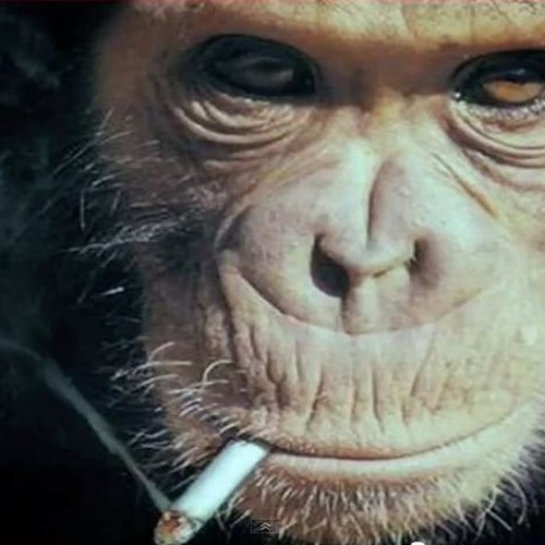 Monkey - Smoking's avatar