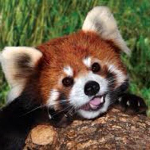 Love_the_red_panda's avatar